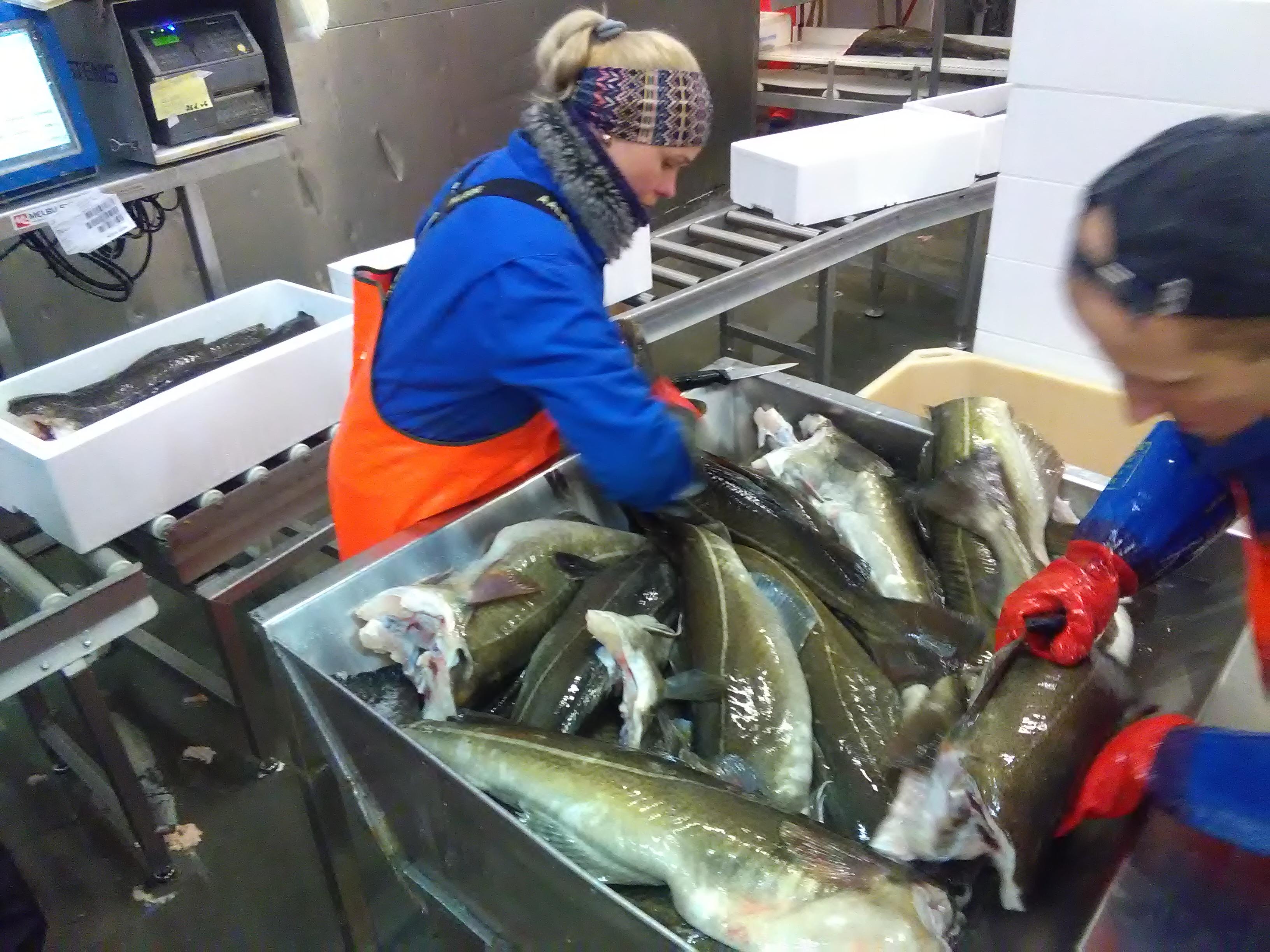 Portugal exporta bacalhau fresco premium para os Estados Unidos